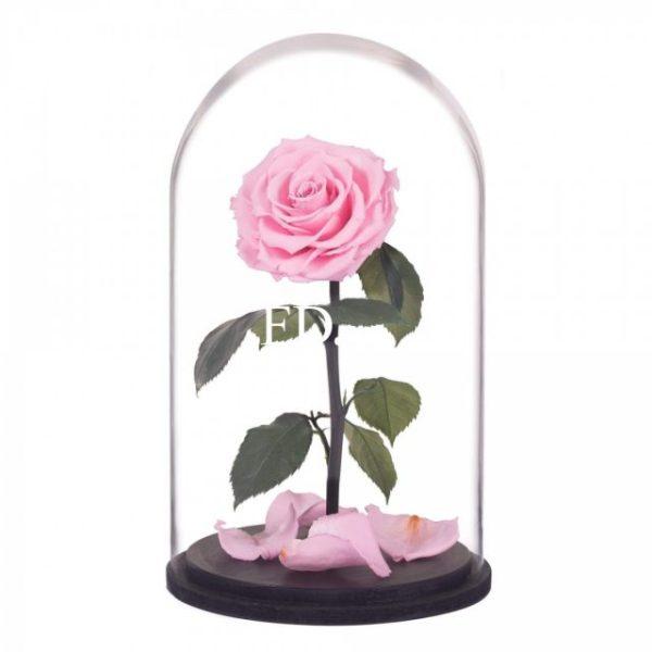 Рисунки карандашом роза в колбе (16 фото) 🔥 Прикольные ...