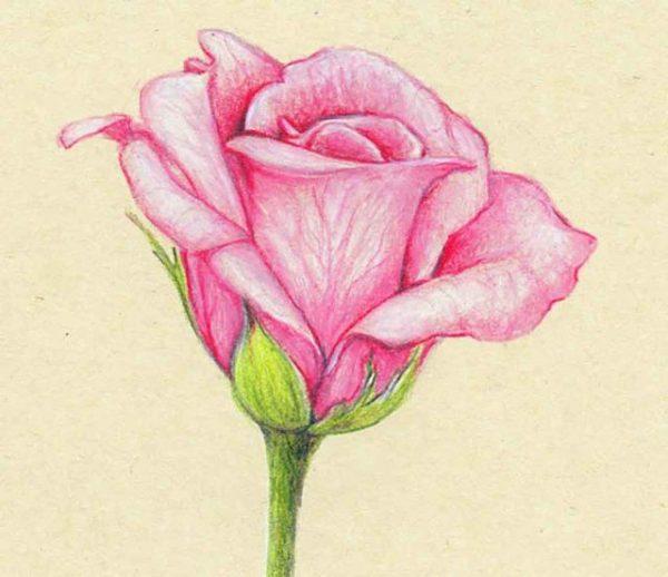 Картинки розы карандашом для срисовки (28 фото ...