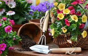 blog gardening image