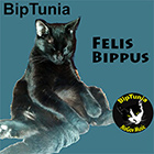 felis bippus album cover, pic of cat sitting upright, clicking link plays album