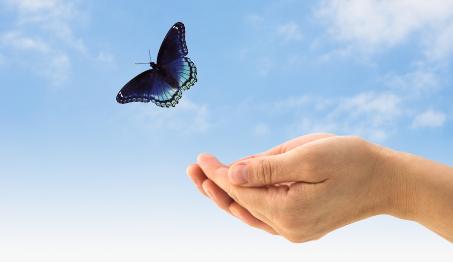 Hands releasing a butterfly