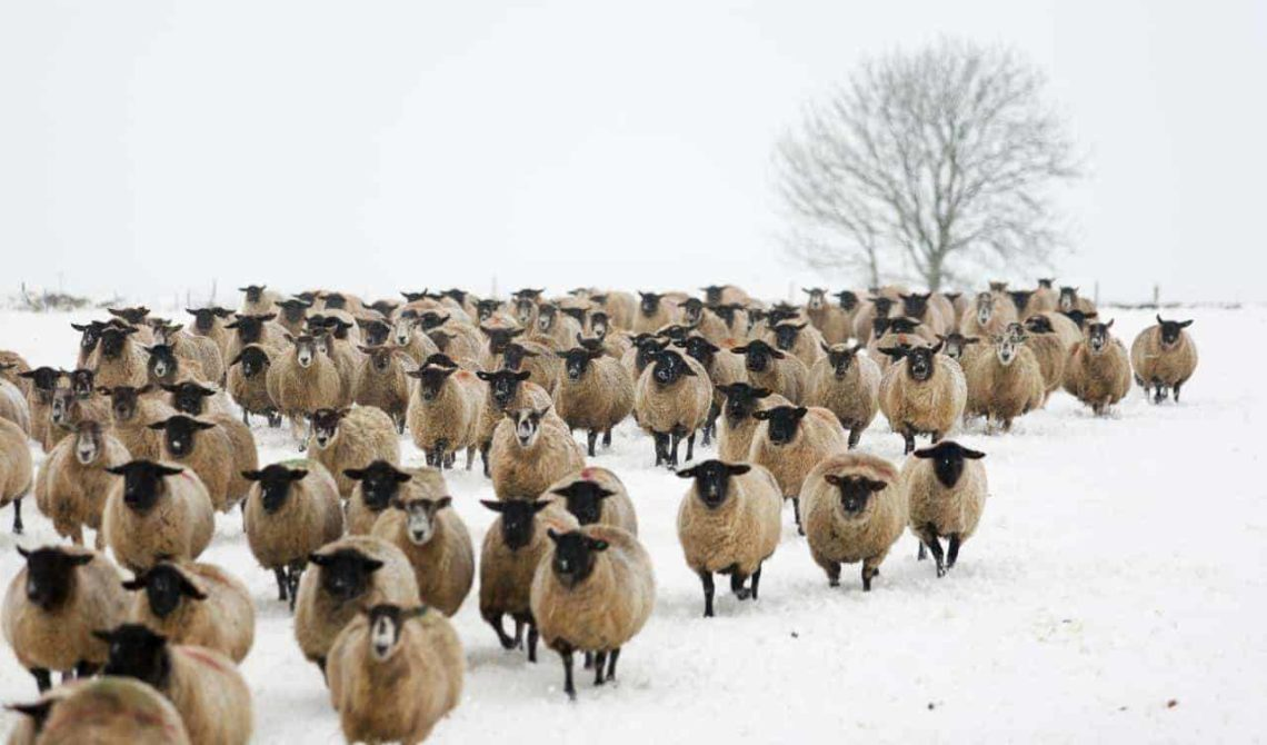 Hawling_Winter_Flock-min