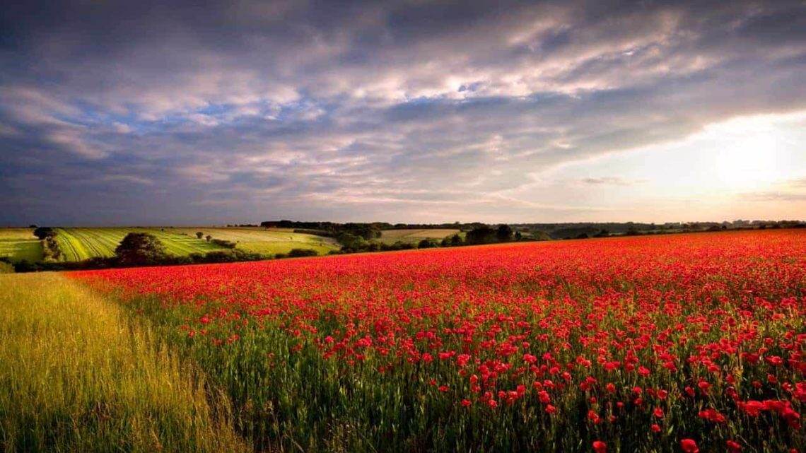 Red Poppies between Burford & Stow-min