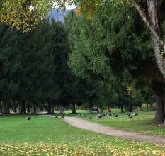 Perfect weather for golf & for wild turkeys