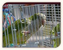 A pet parrot enjoying the deck