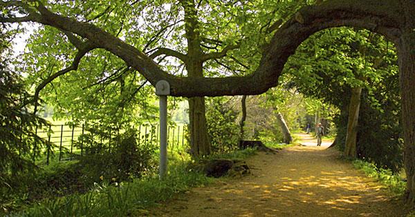 Oxford-path-overreach