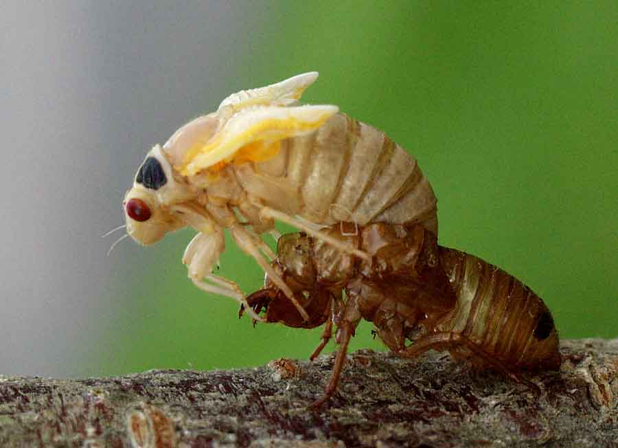emerging-cicada171