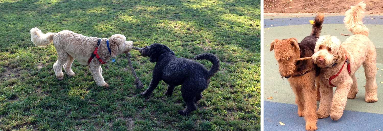 Barney, Flora & Castle battle over sticks