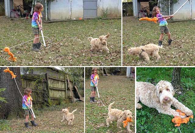 boy with orange stuffed animal plays with puppy