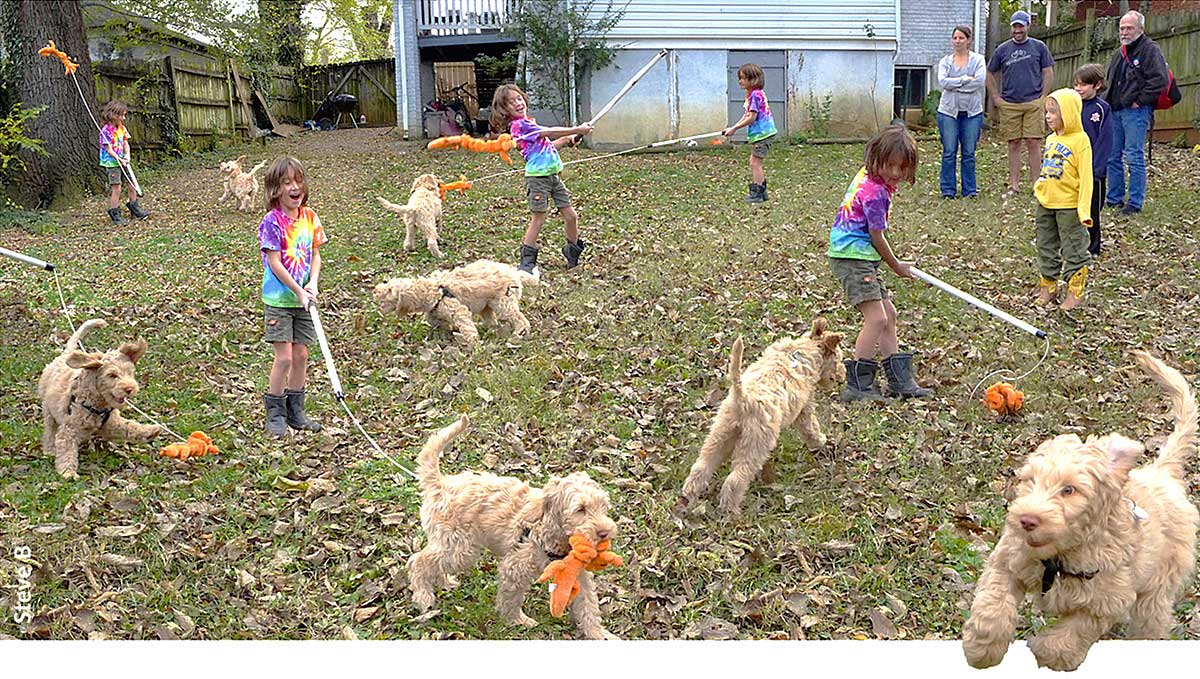 "Charlie wields ""orange varmint"" teaser pole to amuse puppy"