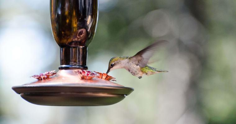 What to Consider When Buying Bulk Wild Bird Seed