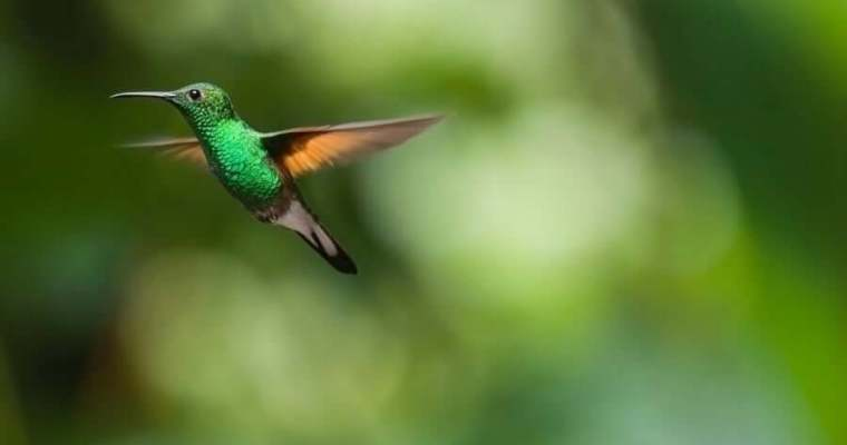 Providing A Hummingbird Bird Bath