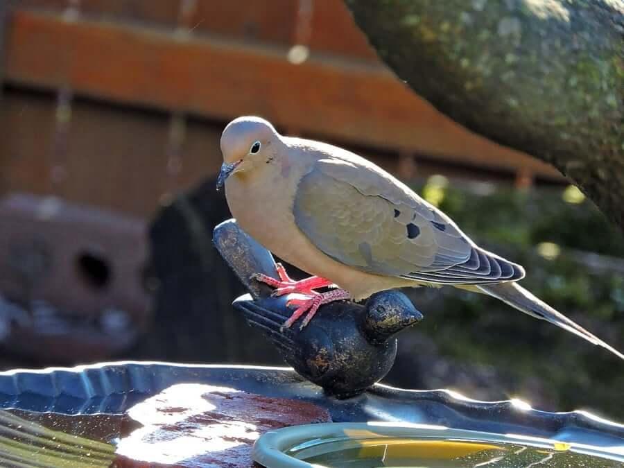 Birdbaths for Sale – What To Consider