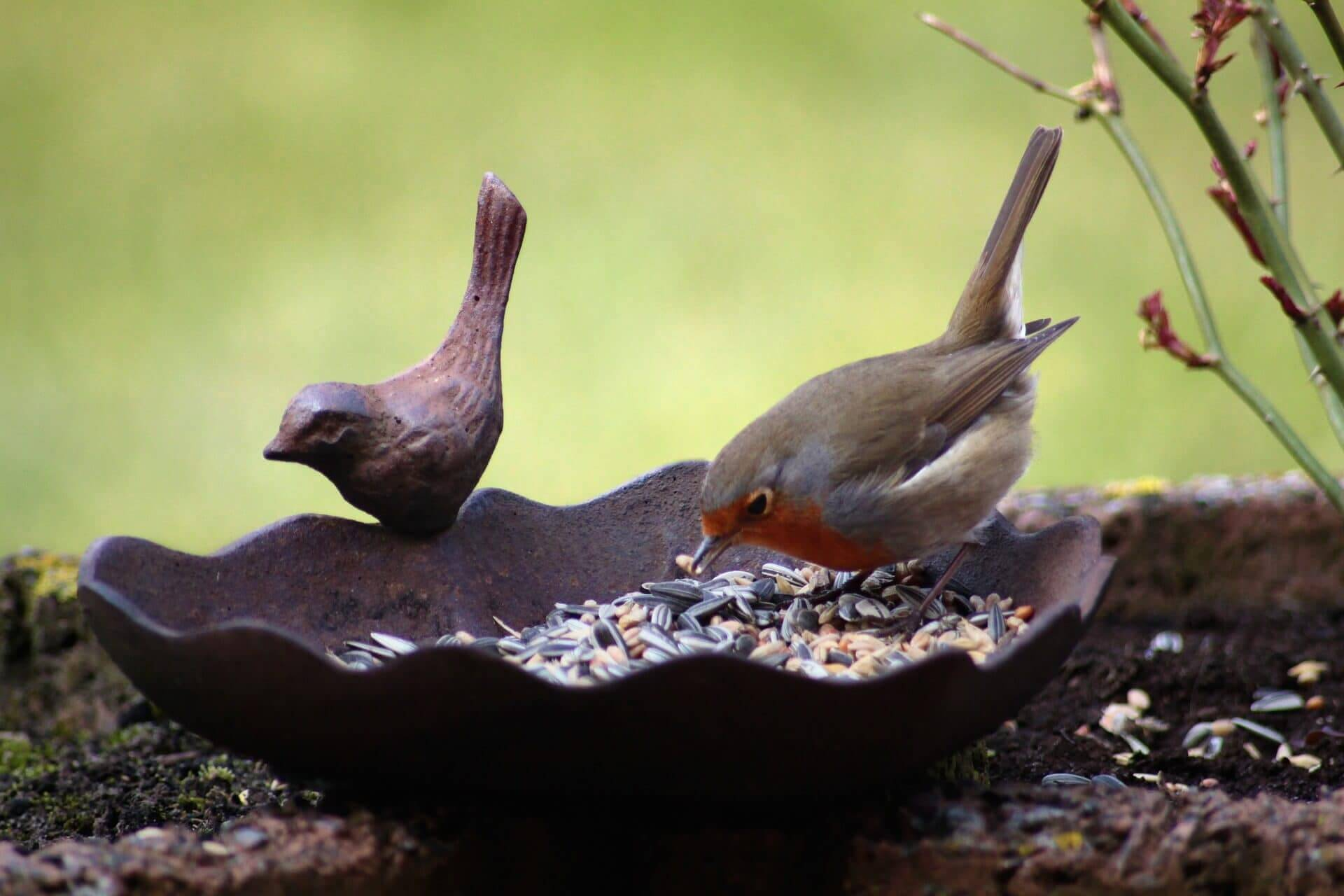 Cool Bird Baths For Sale On Amazon For The Truly Hip