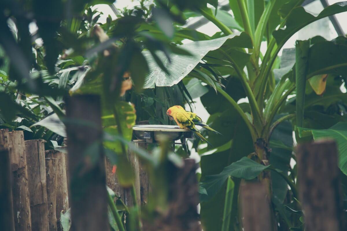 Bird Baths For Sale And Advice On Which Bird Baths To Buy