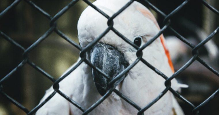 Outdoor Bird Aviaries For Sale