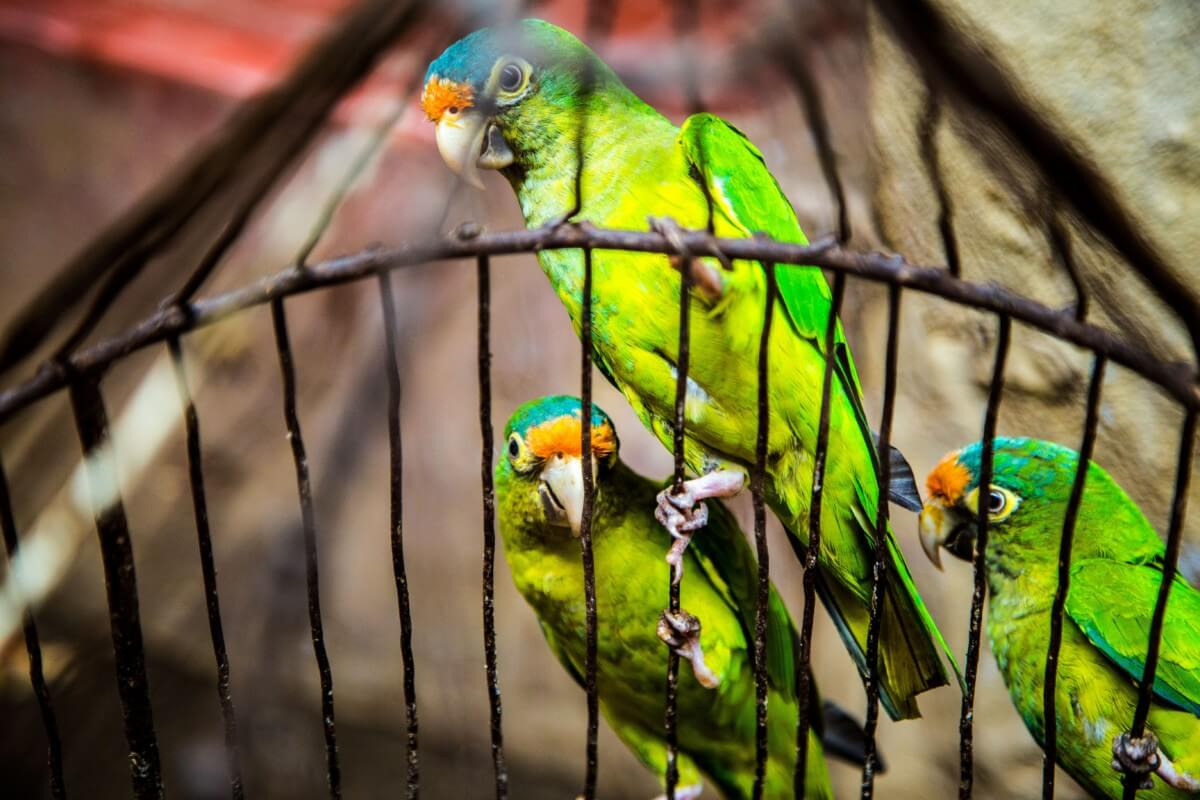 Best Bird Cages For Sale