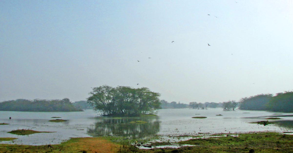 Sultanpur_Bird_Sanctuary