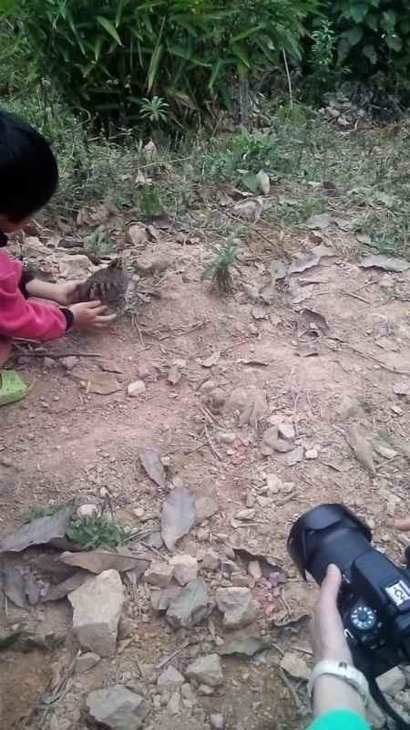 releasing Hainan Partridge