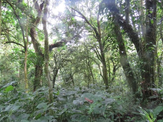 2015-11-15 forest at Bwindi