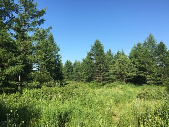 2016-07-10 forest at wuerqihan