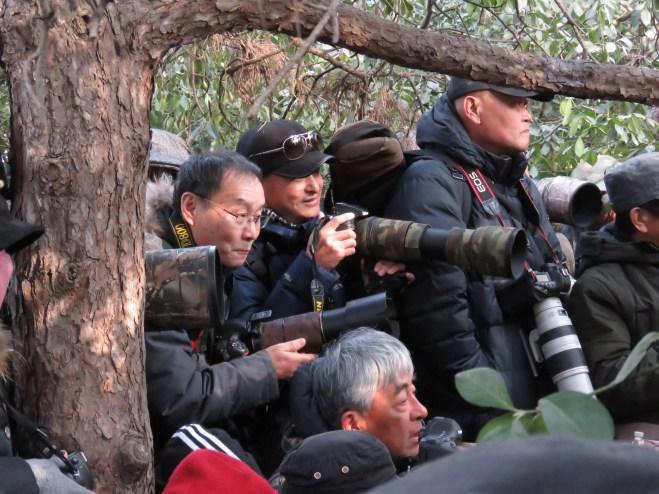 2019-01-11 Robin twitch, Beijing Zoo 3