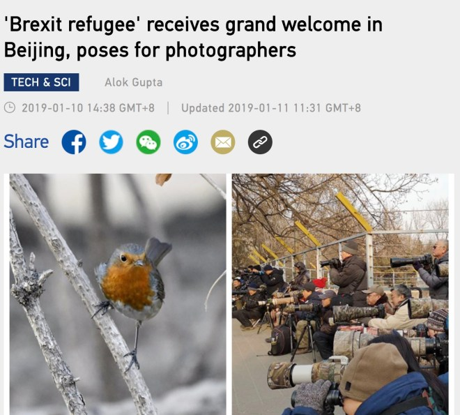 brezxit refugee article