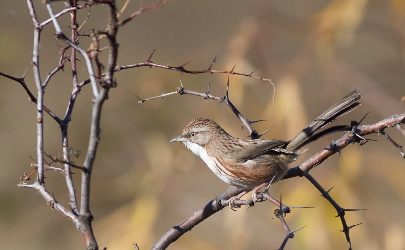 Ten birds to look out for in Beijing this Spring