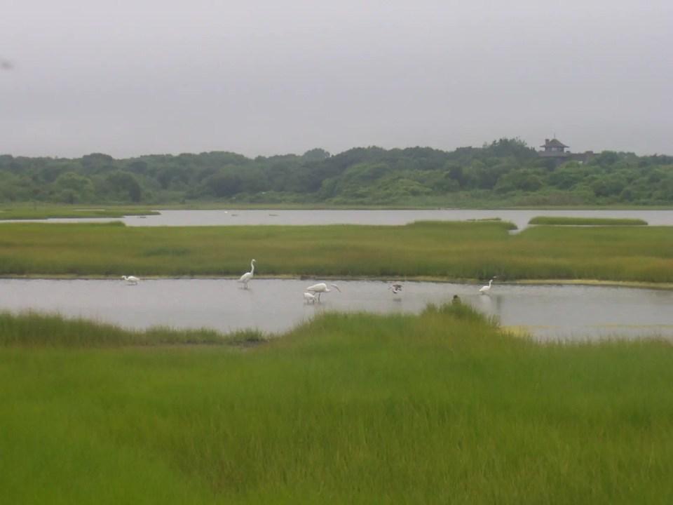 Cordgrass Marsh