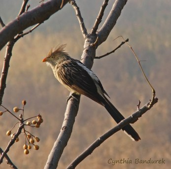 16 Birdingmurcia - Cynthia Bandurek
