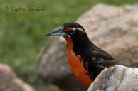 23 Birdingmurcia - Cynthia Bandurek