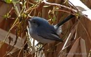 35 Birdingmurcia - Cynthia Bandurek