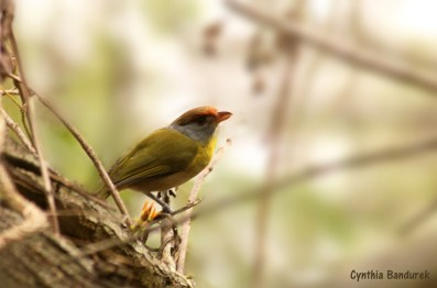 36 Birdingmurcia - Cynthia Bandurek