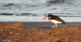 26 Birdingmurcia - Marcelo Cruz