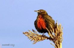 32 Birdingmurcia - Marcelo Cruz