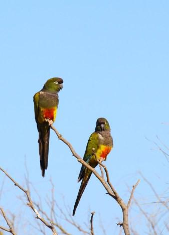 34 Birdingmurcia - Marcelo Cruz