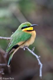 02 Birdingmurcia - Kique Ruiz