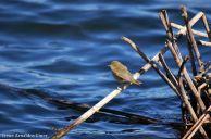 12 I. Arnaldos-birdingmurcia