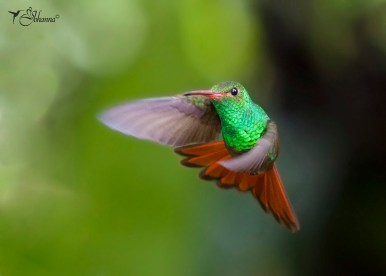 14 Joy Murillo - birdingmurcia