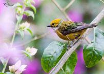 25 Joy Murillo - birdingmurcia