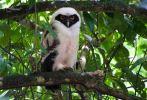 31 Joy Murillo - birdingmurcia