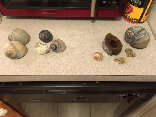 Our shell collection (Image by BirdNation)