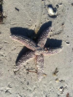 Starfish on the beach (Image by BirdNation)