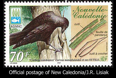 Image result for new caledonian crow