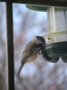 Tips To Save Money On Your Backyard Bird Feeding