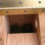 chickadee house 2