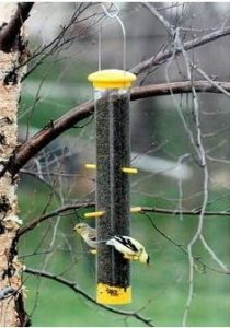 I'm Being Overrun By Goldfinches! Here's How You Can Too