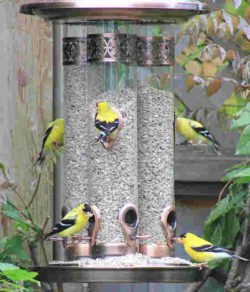 Summer Bird Feeding Tips