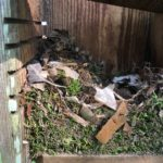 tufted titmouse nesting 3