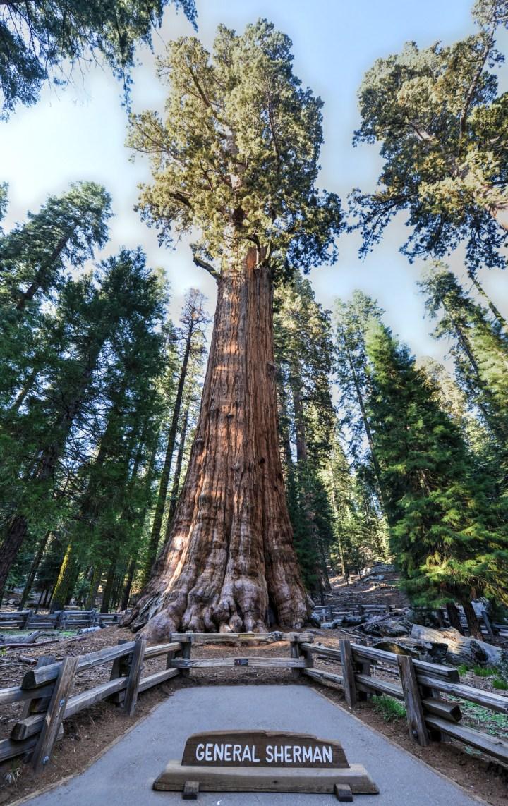 Sequoia Park : la forêt des géants